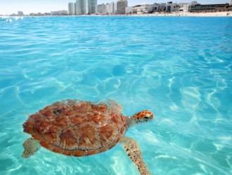 Cancún, México · 8 días · Salidas todo el año y en cualquier Fecha